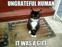 Join Animal Memes. smile emoticon: UNGRATEFUL HUMAN  Kats S  IT WAS A GIFT Join Animal Memes. smile emoticon