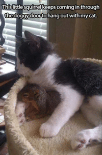 Join Animal Memes. smile emoticon: This little squirrel keeps coming in through  thedoggydoortohang out with mycat. Join Animal Memes. smile emoticon
