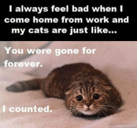 Join Disney Memes: I always feel bad when I  come home from work and  my cats are just like...  You were gone for  forever.  counted. Join Disney Memes