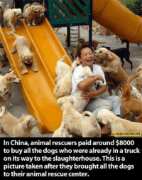 Thank you! grin emoticon  Disney Memes: VIA THEMETAPICTURE COM  In China, animal rescuers paid around $8000  to buy all the dogs who were already in a truck  on its way tothe slaughterhouse. This is a  picture taken after they brought all the dogs  to their animal rescue center. Thank you! grin emoticon  Disney Memes