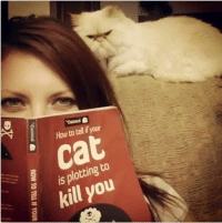 Cats, Disney, and Meme: How to tell ifyour  Cat  is plotting to  kill you  to u  go  is k  -o  at meal ea HOW TO TELL IF YOUR  er Disney MemesJoin Disney Memes