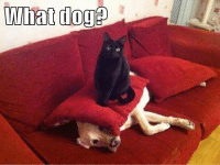 What dog? Join Animal Memes. for more grin emoticon: what  dog What dog? Join Animal Memes. for more grin emoticon