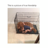 cute as fuck: This is a picture of true friendship cute as fuck