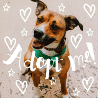 Memes, 🤖, and Ark: 5c Sweet girl PJ is looking for her forever home at Noah's Ark. You could be the one she's been waiting for! PJ is a 2 year old spayed female beagle mix. PJ was adopted from the ark over the summer, but brought back from not getting along with the other dog in the home. For this reason, PJ must be the only dog in the household she lives in. PJ loves to be spoiled, walks well on a leash, sits, and rolls over for belly rubs. PJ is looking for her special someone to come free her from her kennel. More info on the adoption process and more photos of PJ  at www.noahsarkrockford.com