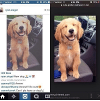 Who the fuck lies about owning a new dog: 6:04 PM  coo Verizon LTE  9:05 PM  o 42%  Mooo Verizon  o 13%  cute golden retriever in car  39  ryan siegel  402 likes  view all 26 comments  samwolf125 Awww  alexapohlkamp Awww!!! So cute  sammlusnek Can pls have ur dog?  www.pinterest.com  ages may be subject to copyright. Who the fuck lies about owning a new dog