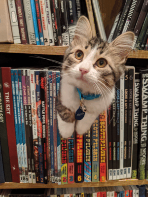 """I knew she had a hiding spot in the front room, never would have guess it was behind the comics: 6  6  3  456  Moch  8  12  6 24  NUS  UK  vertico  SSWAMP THINGMOORE  MERTAD  BISSETTE TOTEEN  SWAMPTHING MOORE  2  VERTIC  LOCKE & KEY ALPAOECA  HICKMA  BODENN  GAIMAN KUBERT ISA  mtoocom  IDW  IDW  IDW  LOCKE &KEY CLOCKWORKS  HILL RODRIGUEZ  LOCKE & KEY KEYSO THE KINGDOM  HILL RODRIGUEZ  LOEKE& KT CROS OF SHADOWS  zangneoTIN  IDW  &KEY BEAD GAMES  HILL RODRIGUEZ  IDW  THE  HILL RODRIGUEZ  IDW  T  ISCOTT PILGRIH  ECOTT PILGRIM  RYAN UEE  OMAUEY  R  oM  DE CERVANTES  ד PILERI%  TANEE  OMALUEY  TPILGRIM  YAN LE  COTT A. FORD  VEKTR  VERTIC  TPILGRIM  PILGRIM  STOKES ET AL  RYAN LEE  OMAEY  Pennington  BRYAN LES )  O'MALLEY  ATOMIC  Cevingr  10  60  OSSMO  ATOMIC ROBO AND THE DLADLY ART OF SCIENCE  C  WILDSTORM/DC COMICS  Clevg  ATOMIC ROBO  AND THE FIGHTIN SCIENTISTS OF TESLABYNE  WARR  avATAR  E  RREN STEWART  IGN AL  KIRKMAN MOORE STAPLES  BATTLE POPE: GENESIS  ANage  Image  HARREN STEWART  BUSTEK DEWEY  IHARREN STEWART  THE AUTUMNLANDS: WOODLAND CREATURES  BUSIEK  DEWEY  VERTIGO  THE AUTUMNLANDS TOOTH&CLAW  IDW  ismage  CLEWNGERWEGENER  ATOMIC ROB0 AND THE TEMPLE OF OD  ATOMIC ROB0 AND THE RING OF FIRE  AND THE NIGHTS OF THE GOLDEN CICLE  IDW  AN HASPIEL  CLEWEER WEENER  Clevingr/g  s5Cai  MIGNOLA NIXEY DALRYMPLE  ATOMIC ROBO  Clevinger  ATOMIC ROBO"""" AND THE SAVAGE SWOR Of RINDSAUR  ATOMIC ROBO AND TE FING SH-rVLOF E PAI  Cevingr  dren  THE KEY  OGY I knew she had a hiding spot in the front room, never would have guess it was behind the comics"""