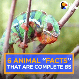 """Facts, Memes, and Animal: 6 ANIMAL """"FACTS""""  03  THAT ARE COMPLETE BS"""