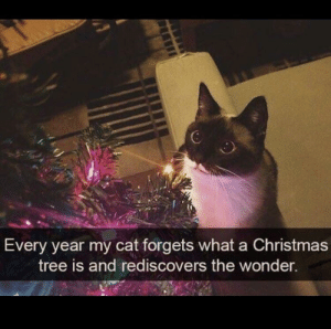 ThE pUrE wOnDeR..: 6  Every year my cat forgets what a Christmas  tree is and rediscovers the wonder. ThE pUrE wOnDeR..