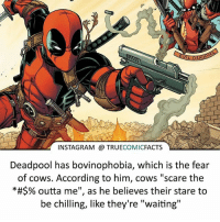 "What are you most afraid of?! ⠀_______________________________________________________ superman joker redhood martianmanhunter dc batman aquaman greenlantern ironman like spiderman deadpool deathstroke rebirth dcrebirth like4like facts comics justiceleague bvs suicidesquad benaffleck starwars darthvader marvel flash reverseflash vandalsavage godspeed: 6  INSTAGRAM TRUECOMICFACTS  Deadpool has bovinophobia, which is the fear  of cows. According to him, cows ""scare the  *#$% outta me"", as he believes their stare to  be chilling, like they're ""waiting"" What are you most afraid of?! ⠀_______________________________________________________ superman joker redhood martianmanhunter dc batman aquaman greenlantern ironman like spiderman deadpool deathstroke rebirth dcrebirth like4like facts comics justiceleague bvs suicidesquad benaffleck starwars darthvader marvel flash reverseflash vandalsavage godspeed"