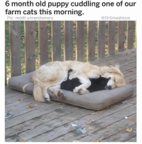 Cats, Cute, and Funny: 6 month old puppy cuddling one of our  farm cats this morning.  Pic: reddit u/mandiemary  @DrSmashlove Holy smokes this is so damn cute (@drsmashlove)