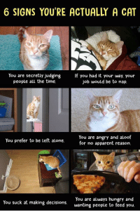 Being Alone, Hungry, and Time: 6 SIGNS YOU'RE ACTUALLY A CAT  You are secretly judgingIf you had it your way. your  people all the time.  job would be to nap  You are angry and aloof  for no apparent reason.  You prefer to be Left alone  You are always hungry and  wanting people to feed you.  You suck at making decisions. Meirl