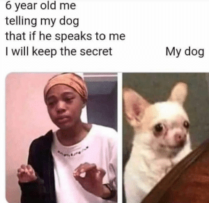 me_irl - Posted by u/gentry1066: 6 year old me  telling my dog  that if he speaks to me  I will keep the secret  My dog me_irl - Posted by u/gentry1066