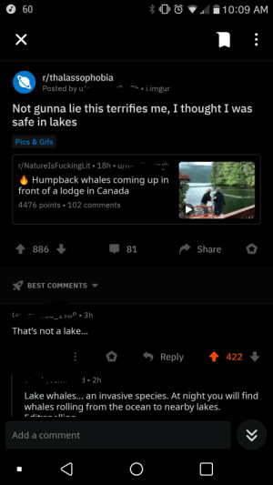 Facepalm, Best, and Canada: 60  10:09 AM  X  r/thalassophobia  Posted by u  i.imgur  Not gunna lie this terrifies me, I thought I was  safe in lakes  Pics & Gifs  r/NatureIsFuckingLit 18h u/ii-  Humpback whales coming up in  front of a lodge in Canada  4476 points 102 comments  886  Share  81  BEST COMMENTS  _170°.3h  MU  That's not a lake...  Reply  422  d 2h  Lake whales... an invasive species. At night you will find  whales rolling from the ocean to nearby lakes.  Add a comment  >> New breed of lake whales...