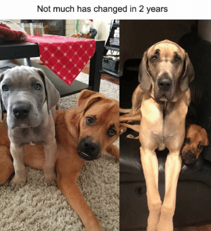 60 Animal Memes Guaranteed To Make You Laugh Every Time - JustViral.Net: 60 Animal Memes Guaranteed To Make You Laugh Every Time - JustViral.Net