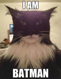 IAM  BATMAN Grumpy Cat.