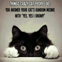 "Cats, Crazy, and Grumpy Cat: THINGS CRAZY CAT PEOPLE DO  YOU ANSWER YOUR CATS RANDOM MEONS  WTH ""YES, YES KNOW!!"""