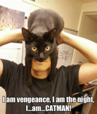am vengeance, I am the night.  I...am...CATMAN!