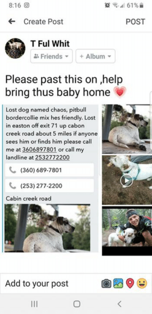 Friends, Memes, and Lost: 61 %  8:16 O  Create Post  POST  T Ful Whit  Friends  Album  Please past this on ,help  bring thus baby home  Lost dog named chaos, pitbull  bordercollie mix hes friendly. Lost  in easton off exit 71 up cabon  creek road about 5 miles if anyone  sees him or finds him please call  me at 3606897801 or call my  landline at 2532772200  (360) 689-7801  (253) 277-2200  Cabin creek road  Add to your post  11  O Missing Dog - Easton, Wa  🌟PLEASE SHARE! Help us get this pet home!  Visit the Website for More Help! LostFoundPetsWaState.com