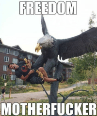 mother fucker: FREEDOM  MOTHERFUCKER