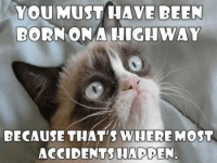 Cat Memes: You MUST HAVE BEEN  BORN ON A HIGHWAY  BECAUSE THAT'S WHERE MOST  ACCIDENTS HAPPEN.