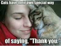 Join Animal Memes.: Cats have their own special way  of saying, Thank you.  Nothing but Kitty CATS Join Animal Memes.