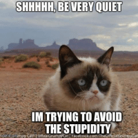 Join Disney Memes if you love Disney smile emoticon: SHHHHH. BEVERY QUIET  IMITRYING TO AVOID  THE STUPIDITY.  girngflip Commpy Cat 1@RealGrumpy Cat Facebook.com TheOfficialGrumpyCat Join Disney Memes if you love Disney smile emoticon