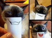 Cats, Grumpy Cat, and Smile: Look at this awesome cat photoshoot grin emoticon. Hehe smile emoticon Join Pusheen the Cat