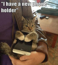 "A phone Holder! grin emoticon  Join Pusheen the Cat smile emoticon: phone  ""I have a new  holder"" A phone Holder! grin emoticon  Join Pusheen the Cat smile emoticon"