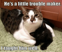 Grumpy Cat, Hes, and Frown: He's a little trouble maker.  I taught hin Well I should be ashamed. frown emoticon