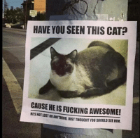 Cats, Fucking, and Grumpy Cat: HAVE YOU SEEN THIS CAT  CAUSE HEIS FUCKING AWESOME!  HESNOTLOSTOR  STORANYTHING.JUSTTHOUGHT YOU SHOULD SEE HIM. Have you seen this cat?! grin emoticon
