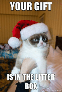 You're welcome. wink emoticon  Join Animal Memes. smile emoticon: YOUR GIFT  IS IN THE LITTER  BOX  memegenerator.net You're welcome. wink emoticon  Join Animal Memes. smile emoticon