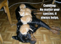 Animals, Anime, and Meme: Cuddling:  No matter your  species, it  always helps. Join Animal Memes. smile emoticon