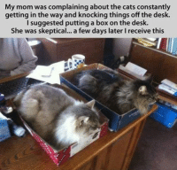 Join Animal Memes. grin emoticon: My mom was complaining about the cats constantly  getting in the way and knocking things off the desk.  suggested putting a box on the desk.  I She was skeptical... a few days later l receive this Join Animal Memes. grin emoticon