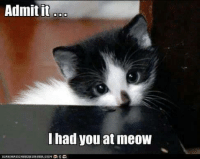 Yes you did. grin emoticon: Admit it  had you at meOW Yes you did. grin emoticon