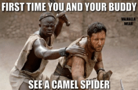 Spider Meme: FIRST TIME YOU AND YOUR BUDDY  VALHALLA  WEAR  SEE A CAMEL SPIDER