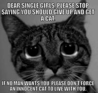 Cats, Girls, and Ups: DEAR SINGLE GIRLS PLEASE  STOP  SAYING YOU SHOULD GIVE UP AND GET  A CAT  IF NO MAN WANTS VOU PLEASE DON'T FORCE  AN INNOCENT CAT TO LIVE WITH YOU. LIKE &SHARE TO ALL YOUR SINGLE LADIES FREINDS! grin emoticon