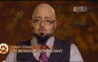 Animal Planet, Cats, and Jackson Galaxy: When you get stranded on Earth without your photon weapons so you just have to come up with a job & survive   Jackson Galaxy  CAT BEHAVIOR CONSULTANT When you get stranded on Earth without your photon weapons so you just have to come up with a job & survive
