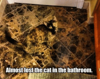 Whoa! grin emoticon  Join Animal Memes. smile emoticon: Almostlostthecat in the bathroom. Whoa! grin emoticon  Join Animal Memes. smile emoticon