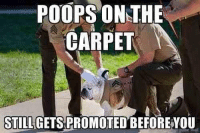Poop Picture: POOPS THE  ON CARPET  STILL GETS PROMOTED BEFORE YOU