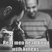 Animals, Anime, and Head: Real men head hoo  with kittens. Agreed?  Join Animal Memes. smile emoticon