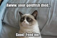 Feed me NOW! wink emoticon  Join Animal Memes. smile emoticon: your goldfish died..  Good. Feed me.  quickmeme.com Feed me NOW! wink emoticon  Join Animal Memes. smile emoticon