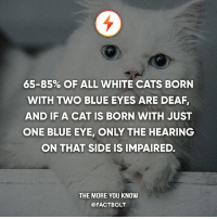 Swipe! 👉 — Source: http:-www.lifewithcats.tv-2016-01-31-the-truth-about-pure-white-cats-with-blue-eyes-: 65-85% OF ALL WHITE CATS BORN  WITH TWO BLUE EYES ARE DEAF,  AND IF A CAT IS BORN WITH JUST  ONE BLUE EYE, ONLY THE HEARING  ON THAT SIDE IS IMPAIRED.  THE MORE YOU KNOW  @FACT BOLT Swipe! 👉 — Source: http:-www.lifewithcats.tv-2016-01-31-the-truth-about-pure-white-cats-with-blue-eyes-