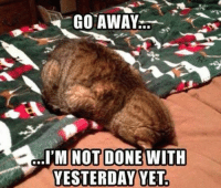 Leave me alone!  Join Animal Memes. smile emoticon: GO AWAY  So..I MINOT DONE WITH  YESTERDAY YET Leave me alone!  Join Animal Memes. smile emoticon