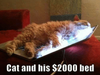Animals, Anime, and Cats: Cat and his $2000 bed grin emoticon  Join Animal Memes. smile emoticon