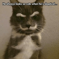 Animals, Anime, and Cute: o  He always looks so cute when he's skeptical grin emoticon  Join Animal Memes. smile emoticon