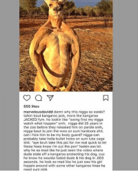 "Ass, Bruh, and Dude: 655 likes  marvelousdavidd damn why this nigga so swole?  talkin bout kangaroo jack, more like kangaroo  JACKED fym. he lookin like ""swing first my nigga  watch what happen"" smh, nigga did 25 years in  the zoo before they released him on parole smh,  nigga bout tojoin the wwe on sum hardcore shit.  can i hire him to be my body guard? nigga carn  probably take hella bullet holes on sum luke cage  shit. ""aye bruh take this pic for me real quick to let  these hoes know i'm out the pen"" lookin ass lol.  why he so mad like he just seen the video where  dude stole off a kangaroo protecting his dog, cuz  he know he woulda faded dude & his dog in .003  seconds. he look so mad like he just saw his girl  hoppin around with some other kangaroo Imao he  need sum milk @marvelousdavidd posts some of the most hilarious roasts lmaoooooo"