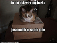 Do not ask......... Join Animal Memes. smile emoticon: do not ask why box barks  Just mail it to South pole Do not ask......... Join Animal Memes. smile emoticon
