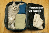 You're taking me with you, right? frown emoticon  Join Animal Memes. smile emoticon: You're taking me  with you right?  ILoveFunny Cats me You're taking me with you, right? frown emoticon  Join Animal Memes. smile emoticon