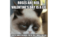 Cats, Ugly, and Valentine's Day: ROSESARE RED,  VALENTINE'S DAY ISALIE  YOURE SINGLEBECAUSE YOURE UGLY WHEN YOUCRY smile emoticon  Grumpy Cat.