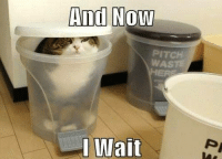 Cats, Grumpy Cat, and Smile: And Now  PITCH  I Wait & now ........ Join Grumpy Cat. smile emoticon